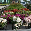 Centrum ogrodnicze